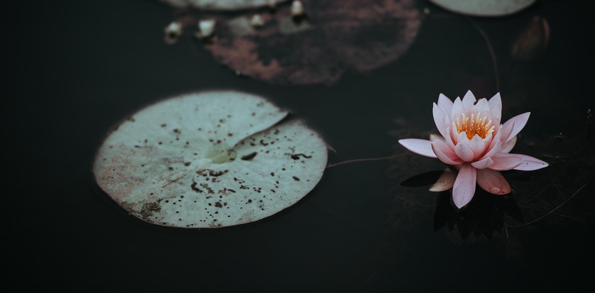 Afinal, o que é espiritualidade?
